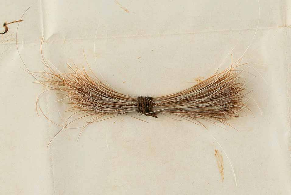 The hair was removed during his postmortem examination, measuring approximately 2″ long.